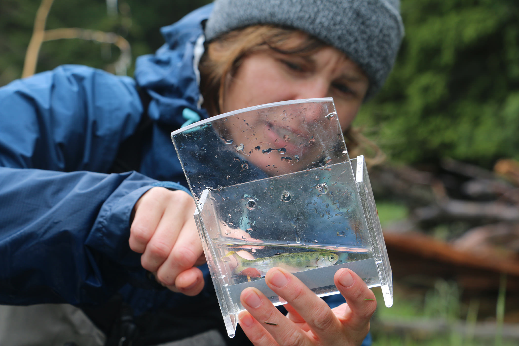 Smolt Assessment Aims to Understand Threats to WCVI Chinook