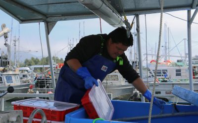 Five Nations pursue limited prawn fishery despite obstacles