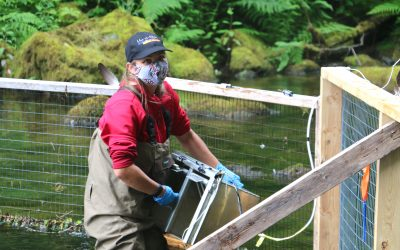 Uu-a-thluk biologist helps assess wildlife species at risk